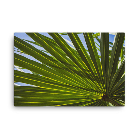Colorized Wide Palm Leaves Botanical Nature Canvas Wall Art Prints