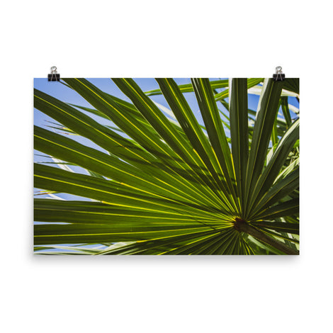 Colorized Wide Palm Leaves Botanical Nature Photo Loose Unframed Wall Art Prints
