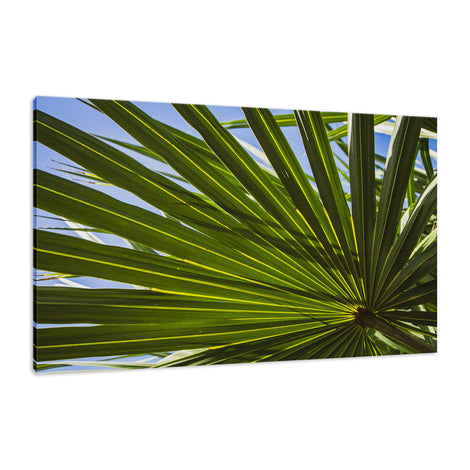 Colorized Wide Palm Leaves Nature / Botanical Photo Fine Art Canvas Wall Art Prints