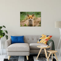 Coming Out Animal / Wildlife Photograph Fine Art Canvas & Unframed Wall Art Prints - PIPAFINEART