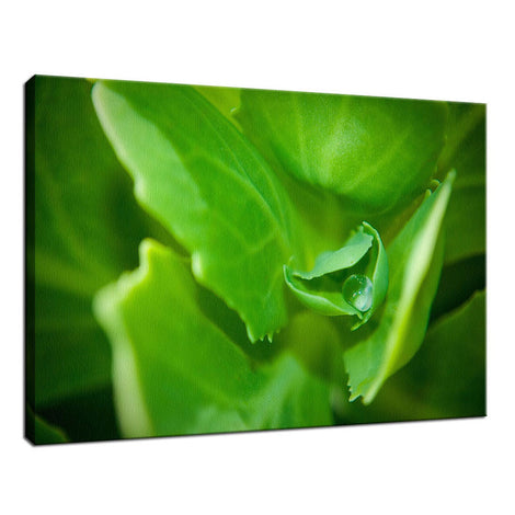 Cupped Droplet Botanical / Nature Photo Fine Art Canvas Wall Art Prints