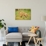 "Daydreaming Animal / Wildlife Photograph Fine Art Canvas & Unframed Wall Art Prints 24"" x 36"" / Canvas Fine Art - PIPAFINEART"