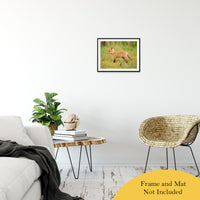 "Daydreaming Animal / Wildlife Photograph Fine Art Canvas & Unframed Wall Art Prints 16"" x 20"" / Classic Paper - Unframed - PIPAFINEART"