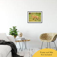 "Daydreaming Animal / Wildlife Photograph Fine Art Canvas & Unframed Wall Art Prints 20"" x 24"" / Classic Paper - Unframed - PIPAFINEART"