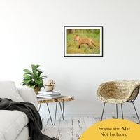 "Daydreaming Animal / Wildlife Photograph Fine Art Canvas & Unframed Wall Art Prints 20"" x 30"" / Classic Paper - Unframed - PIPAFINEART"