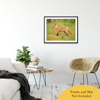 "Daydreaming Animal / Wildlife Photograph Fine Art Canvas & Unframed Wall Art Prints 24"" x 36"" / Classic Paper - Unframed - PIPAFINEART"