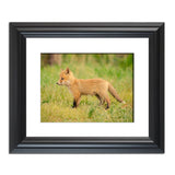 Daydreaming Animal / Wildlife Photograph Fine Art Canvas & Unframed Wall Art Prints  - PIPAFINEART