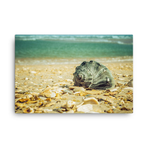 Daydreams on the Shore Coastal Nature Canvas Wall Art Prints