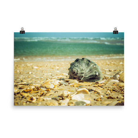 Daydreams on the Shore Coastal Nature Photo Loose Unframed Wall Art Prints