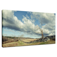 Dead Tree and Stone Wall - Split Toned Fine Art Canvas Wall Art Prints  - PIPAFINEART