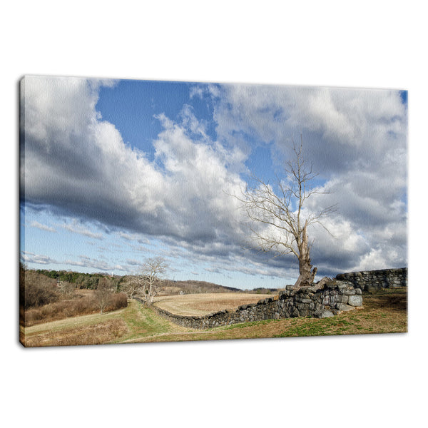 Dead Tree and Stone Wall - Color Fine Art Canvas Wall Art Prints - Rural / Farmhouse / Country Style Landscape Scene