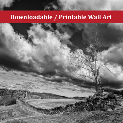 Dead Tree and Stone Wall Black and White Landscape Photo DIY Wall Decor Instant Download Print - Printable