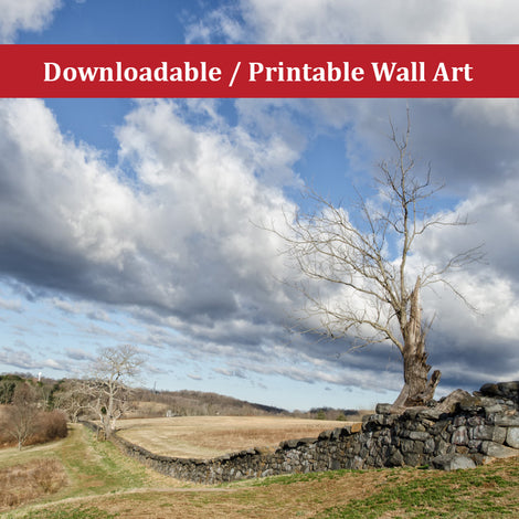 Dead Tree and Stone Wall Landscape Photo DIY Wall Decor Instant Download Print - Printable