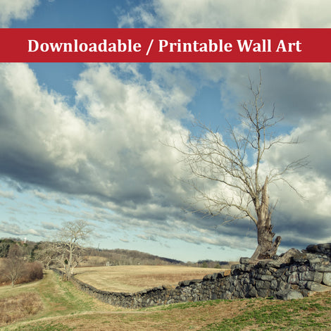 Dead Tree and Stone Wall Split Toned Landscape Photo DIY Wall Decor Instant Download Print - Printable