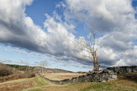 Dead Tree and Stone Wall - Color Fine Art Canvas Wall Art Prints  - PIPAFINEART