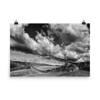 Dead Tree and Stone Wall Black and White Landscape Photo Loose Wall Art Prints  - PIPAFINEART
