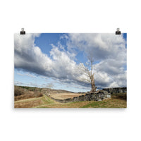 Dead Tree and Stone Wall Landscape Photo Loose Wall Art Prints  - PIPAFINEART