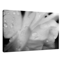 Delicate Rose Petals Black & White Nature / Floral Photo Fine Art Canvas Wall Art Prints  - PIPAFINEART