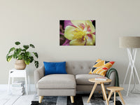 "Delicate Columbine Nature / Floral Photo Fine Art Canvas Wall Art Prints 24"" x 36"" / Fine Art Canvas - PIPAFINEART"
