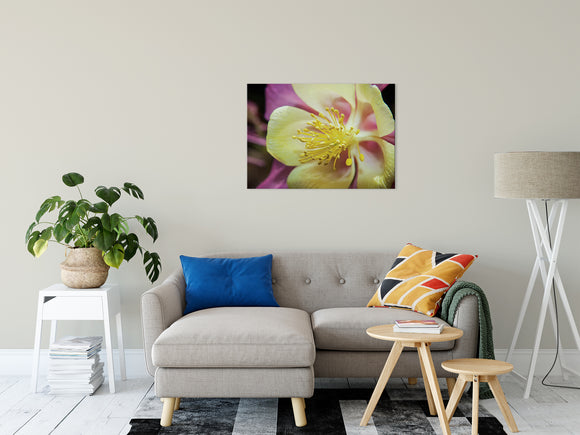 Floral Nature Photograph Delicate Columbine - Fine Art Canvas - Home Decor Unframed Wall Art Prints