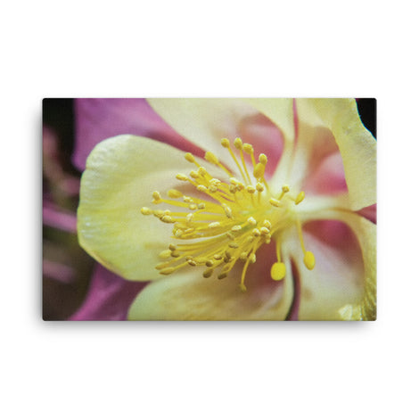 Delicate Columbine Floral Nature Canvas Wall Art Prints