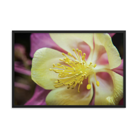 Delicate Columbine Floral Nature Photo Framed Wall Art Print