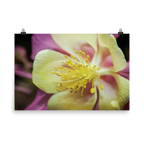 Delicate Columbine Floral Nature Photo Loose Unframed Wall Art Prints