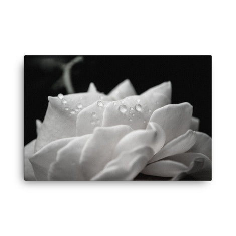 Delicate Rose Black and White Floral Nature Canvas Wall Art Prints