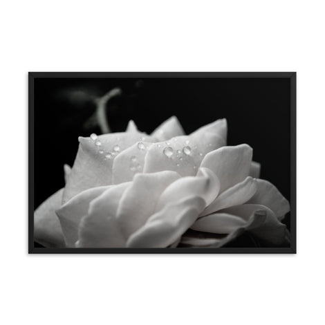 Delicate Rose Black and White Floral Nature Photo Framed Wall Art Print