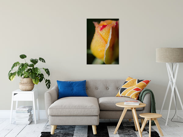 "Dew on Yellow Rose Nature / Floral Photo Fine Art Canvas Wall Art Prints 24"" x 36"" - PIPAFINEART"