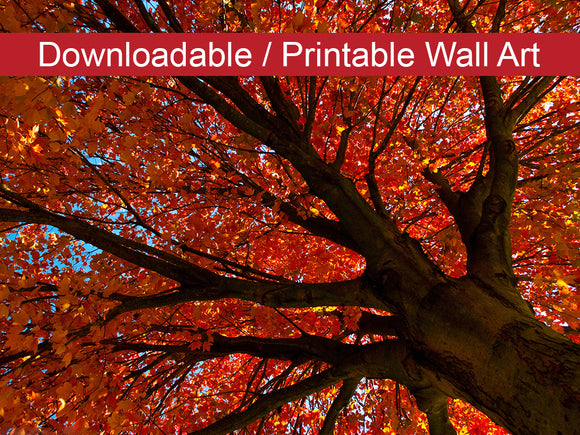 Digital Wall Art, Downloadable Print, Botanical Nature Photo Shimmering Orange Wall Decor Instant -DIY Printable