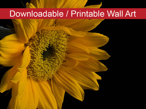 Sunflower from Left DIY Wall Decor Instant Download Print - Printable Wall Art
