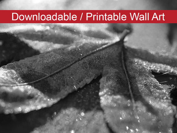 Digital Wall Art, Downloadable Prints, Botanical Nature Photograph Frost Covered Leaf - Wall Decor Instant Download Print - Printable