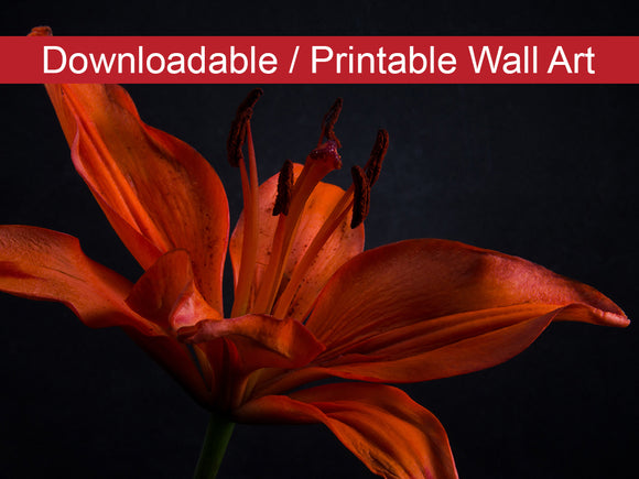 Digital Wall Art, Downloadable Print, Floral Nature Photo Orange Lily with Back Light Wall Decor Instant -DIY Printable