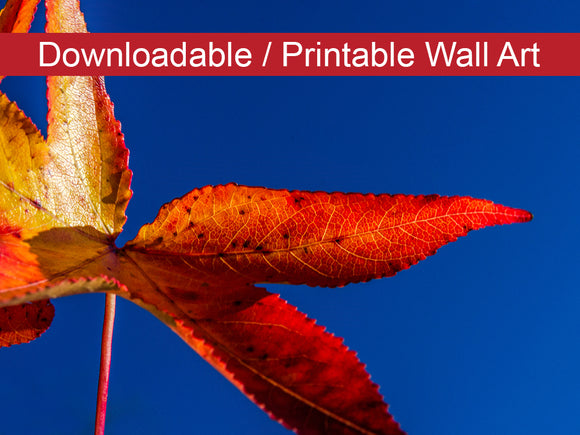 Digital Wall Art, Downloadable Prints, Nature Photography Red and Yellow Foliage Against Sky - Wall Decor Instant Download Print - Printable