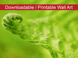 Digital Wall Art, Downloadable Prints, Nature Photography - Fern Leaf Curl, Green - Wall Decor Instant Download Print - Printable