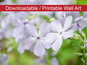 Digital Wall Art, Downloadable Print, Floral Nature Photo Soft Focus Phlox Carolina Wall Decor Instant -DIY Printable
