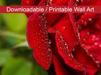Bold and Beautiful Floral Nature Photo DIY Wall Decor Instant Download Print - Printable  - PIPAFINEART