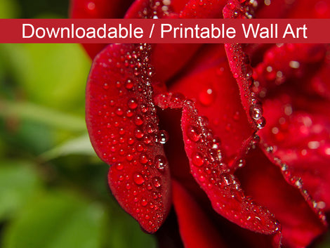 Bold and Beautiful Floral Nature Photo DIY Wall Decor Instant Download Print - Printable