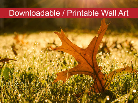 Fall Leaf in Morning Sun Botanical Nature Photo DIY Wall Decor Instant Download Print - Printable