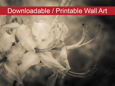 Sepia Aged Rhododendron Blooms DIY Wall Decor Instant Download Print - Printable Wall Art