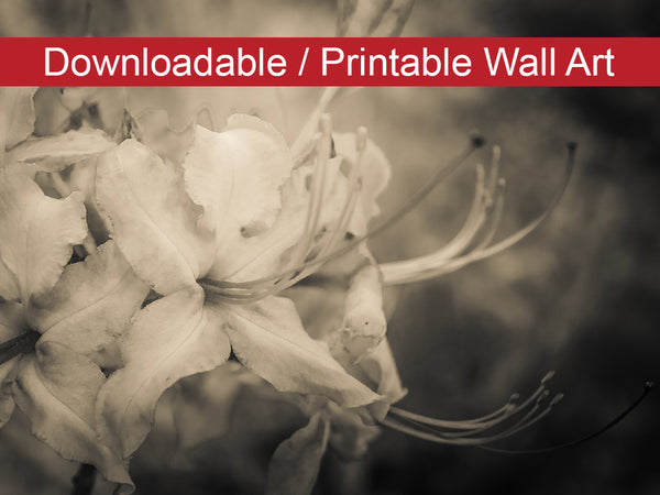 Digital Wall Art, Downloadable Print, Floral Nature Photo Sepia Aged Rhododendron Blooms Wall Decor Instant -DIY Printable