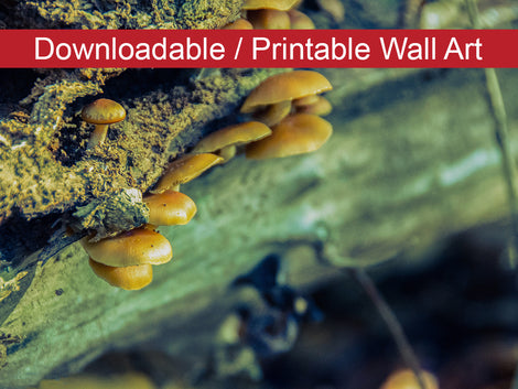 Aged Mushroom Botanical Nature Photo DIY Wall Decor Instant Download Print - Printable