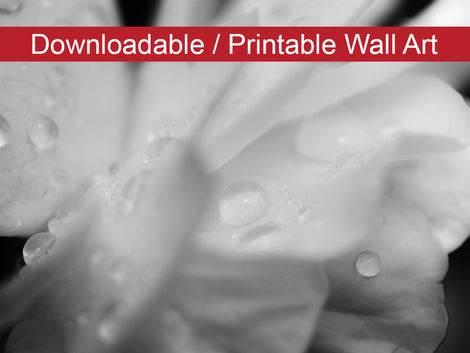 Delicate Rose Petals Floral Nature Photo DIY Wall Decor Instant Download Print - Printable