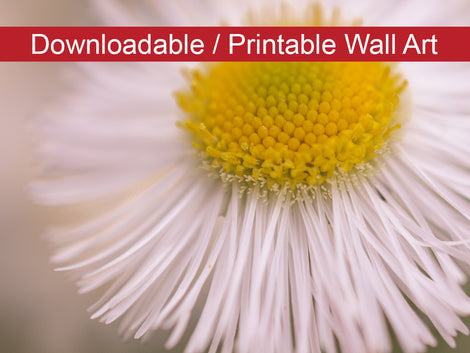 Philadelphia Fleabane Single Bloom DIY Wall Decor Instant Download Print - Printable Wall Art