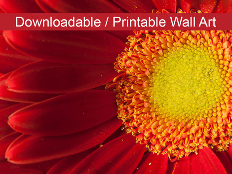 Nature's Beauty DIY Wall Decor Instant Download Print - Printable Wall Art