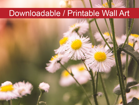 Philadelphia Fleabane Cluster Softened DIY Wall Decor Instant Download Print - Printable Wall Art