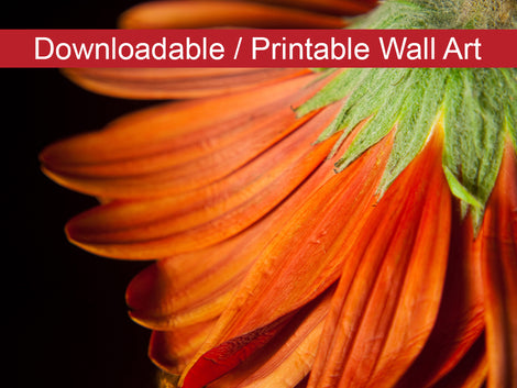 Petite Petals DIY Wall Decor Instant Download Print - Printable Wall Art