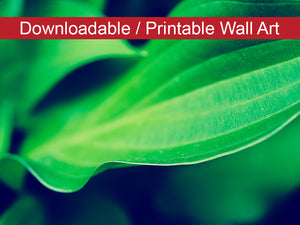 Digital Wall Art, Downloadable Print, Botanical Nature Photo Mellow Hosta Leaves Wall Decor Instant -DIY Printable