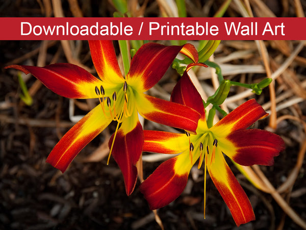 Digital Wall Art, Downloadable Print, Floral Nature Photo Royal Sunset Lily Wall Decor Instant -DIY Printable - PIPAFINEART